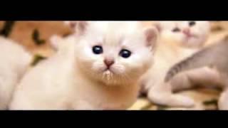милые котята и кошки картинки