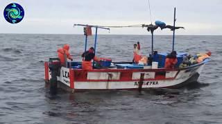 Increíble Pesca Calamar con cordel