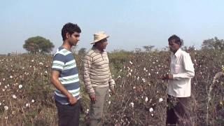 ORGANIC COTTON FARMING