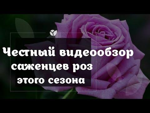 Саженцы | Розы | Новинка | Agro-market.net