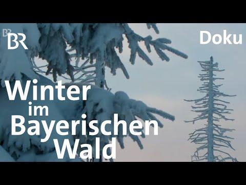 Winter im Bayerischen Wald: rau, eisig & bezaubernd schön | Doku | BR