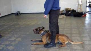 Muzzle Fighting  Dog Training