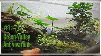 Green Valley #1  |Ant Vivarium | different spicies of ants in 1 tank