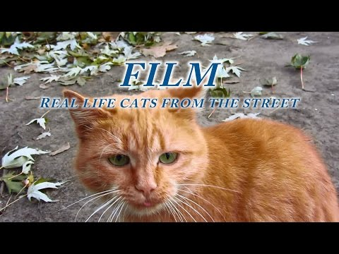 My film is about street cats - Real life cats from the street