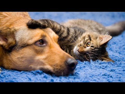 Funny Dog and Cat Videos -Cats and Dogs Annoyed with Friendship Compilation