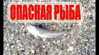 Морской дракончик Рыбалка в море Морская рыбалка с берега как ловить в море на удочку Аланья Турция