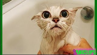 Best Funny Cat MEOWING Compilation