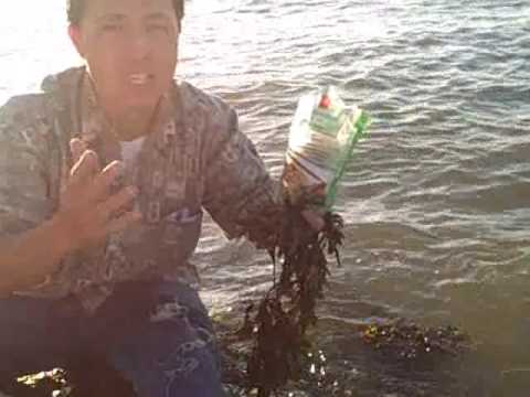 Are Kelp Noodles by Sea Tangle a raw food? Kelp Noodle are used in many raw foods recipes