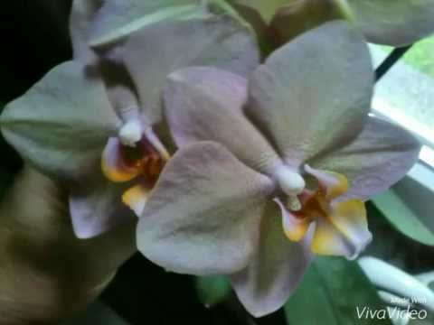 Blumen Flowers Orchideen Julebuergerfee Youtube