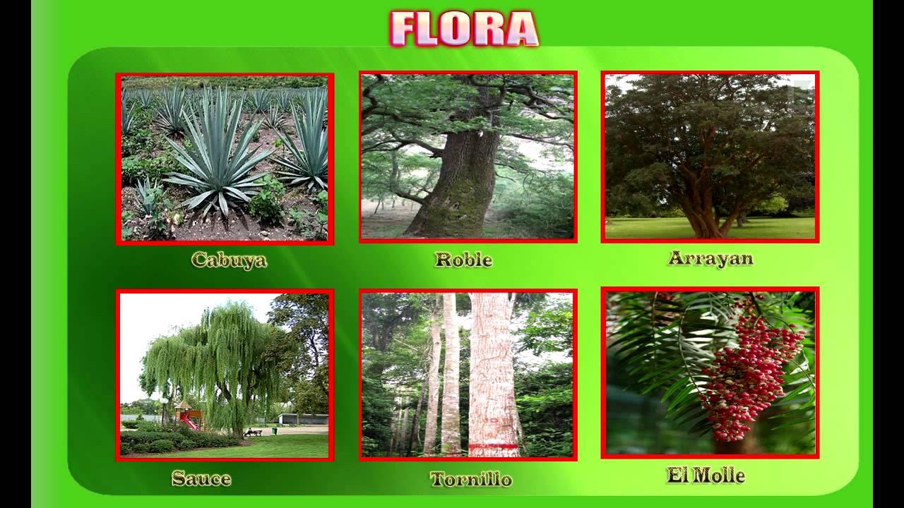 Plantas De Selva Alta: Selva Alta