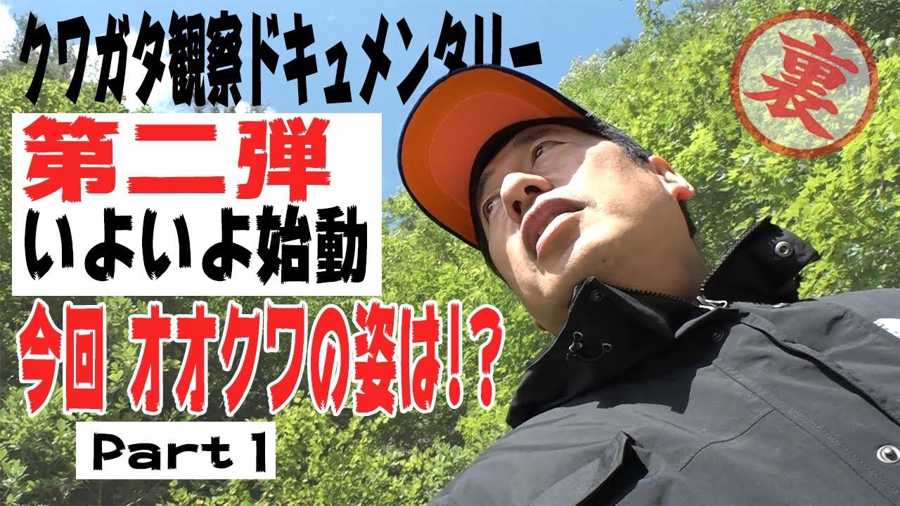 【二夜連続】クワガタ観察第二弾!in浦佐 ドキュメンタリー  これが本当の実録だ