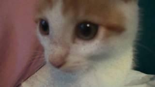 My Kitten Link, And My Fatass Pug, Hachiko