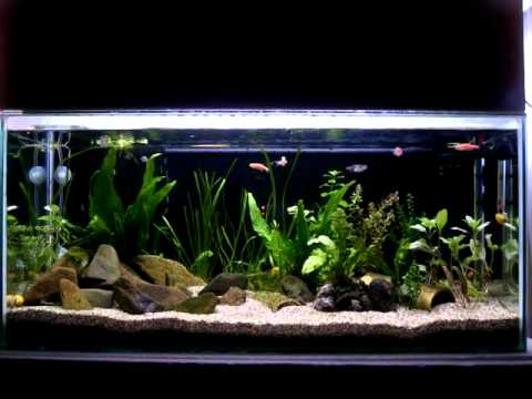 aquarium 100 l on bolta youtube. Black Bedroom Furniture Sets. Home Design Ideas
