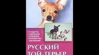 Описание и происхождение породы Русский той терьер
