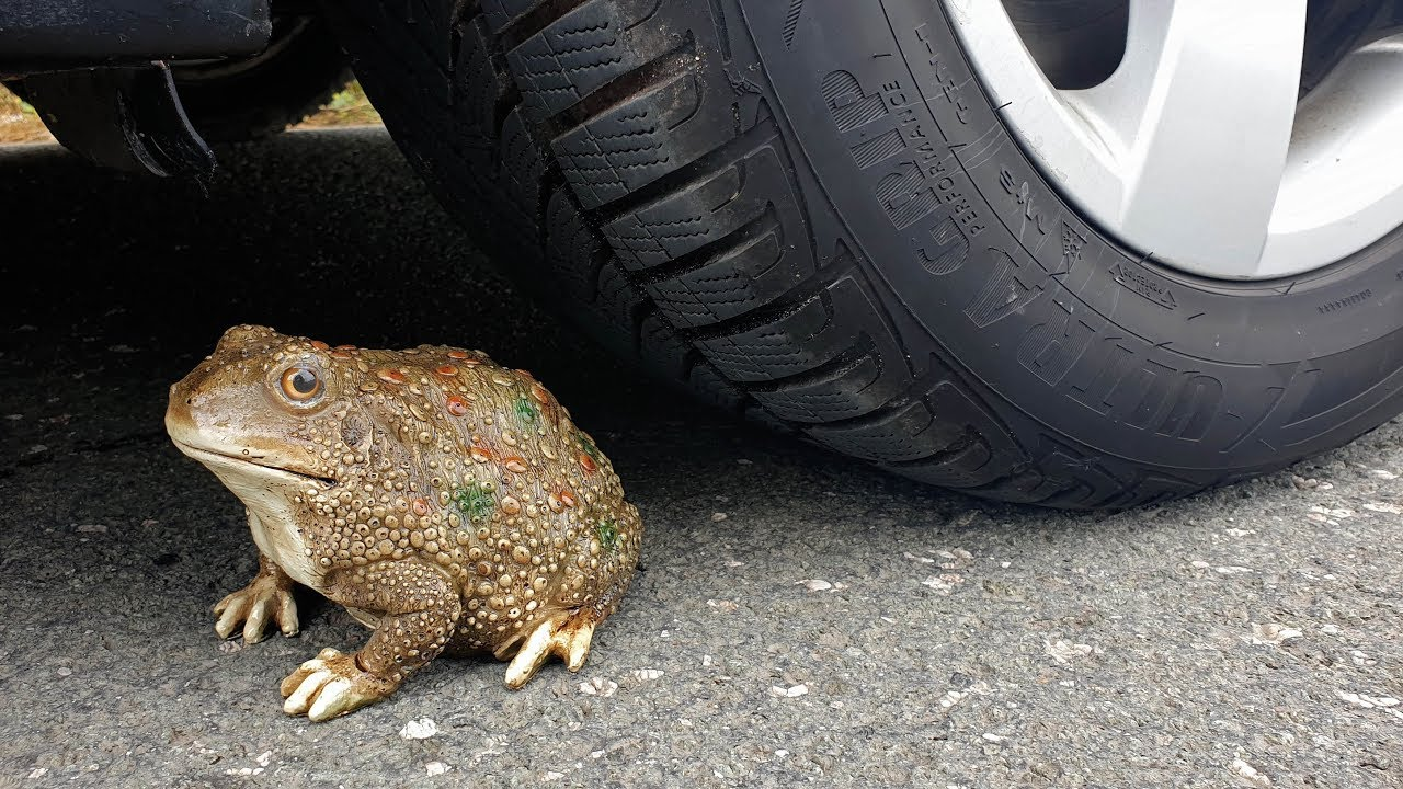 Download Crushing Crunchy & Soft Things by Car! EXPERIMENT CAR vs FROG (Toy)