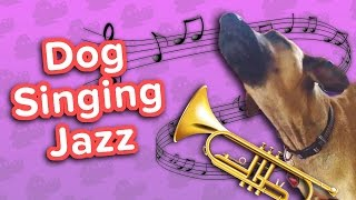 Dog Jazz & Bug-Eyed Kittens! // Funny Animal Compilation