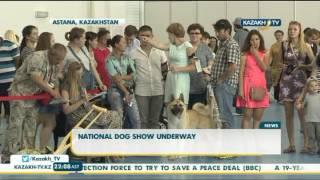 В Астане проходит Национальная выставка собак