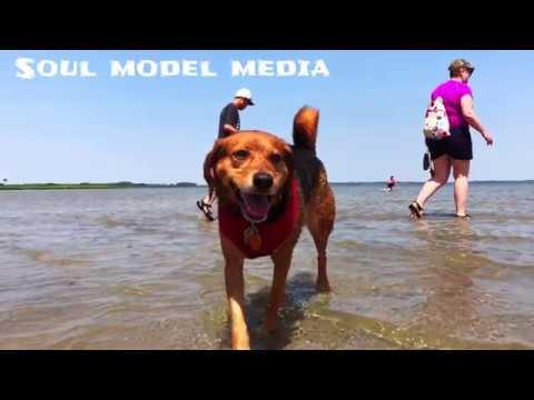 Delaware Dog Beach