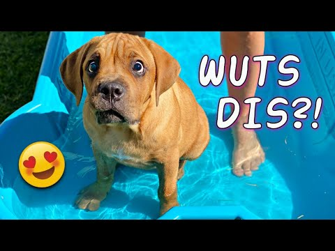 Blind Puppy's First Time in Pool (Cutest Dog Video Ever!)