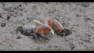 s2第2回 人と生き物が躍動する干潟/【公式】徳島の環境防災まちづくり シリーズ2