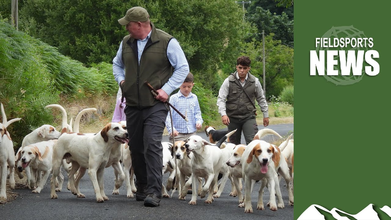 Download Northern Ireland hunting ban: the story so far