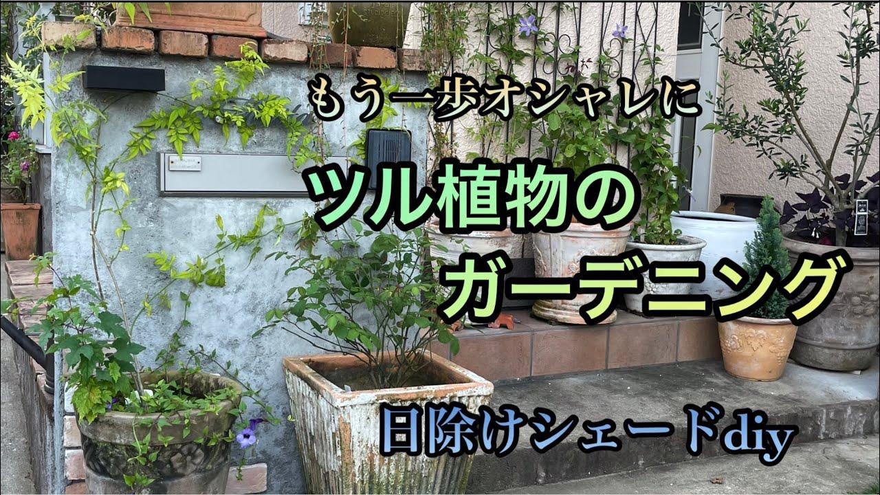 秋の庭【ツル植物のお手入れ】【つるバラ】【日除けシェード作り】ガーデニングdiy