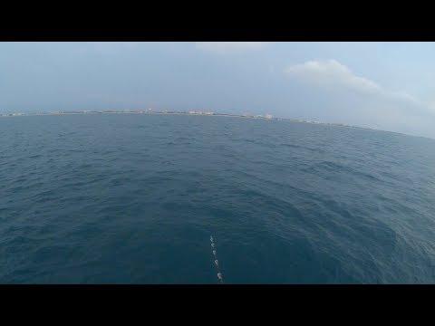 Shark Fishing On The Orlando Princess At Cape Canaveral In Florida
