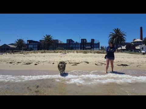 Heisenberg Dog playing at the beach