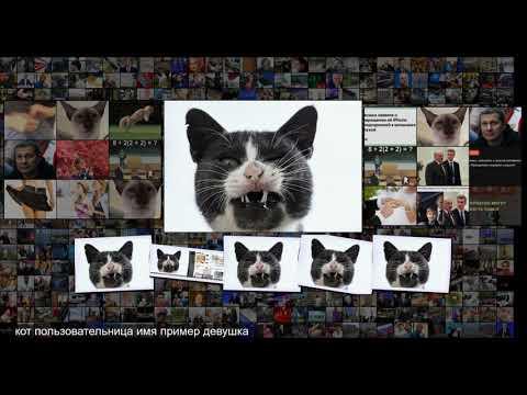 Мужчина вжился в роль злого кота и нажил проблемы в отношениях Coцсети Интернет и СМИ