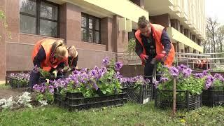 2021-05-05 г. Брест. Цветочное оформление г. Бреста. Новости на Буг-ТВ. #бугтв