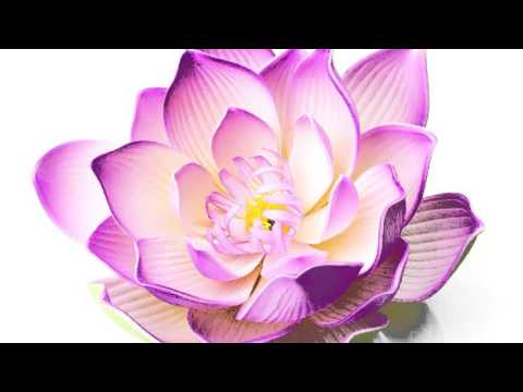 Flower | Most Beautiful Flowers In The World