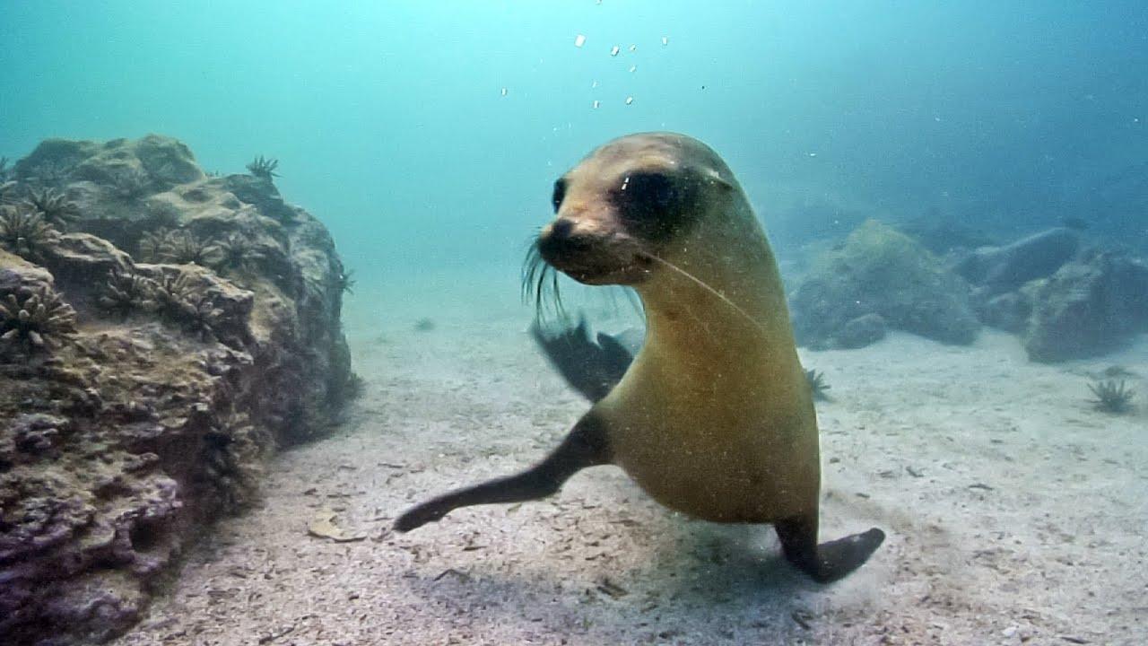 Underwater Nature & Marine Life   Stock Footage Showreel (Demo Reel) HD