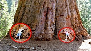 Top 10 FATTEST Trees Ever Found