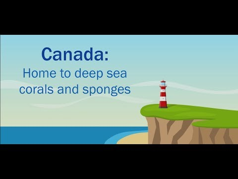 Canada: Home To Deep-sea Corals And Sponges