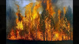 Sự tàn phá rừng _ tâm sự của gốc cây