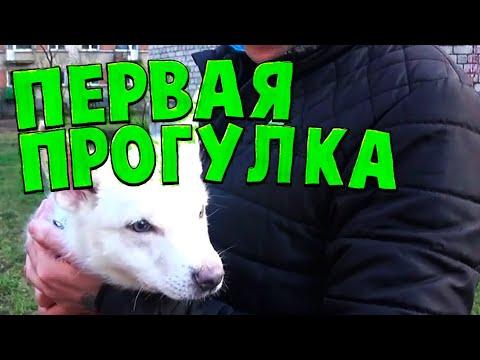 Первая прогулка со щенком после прививки