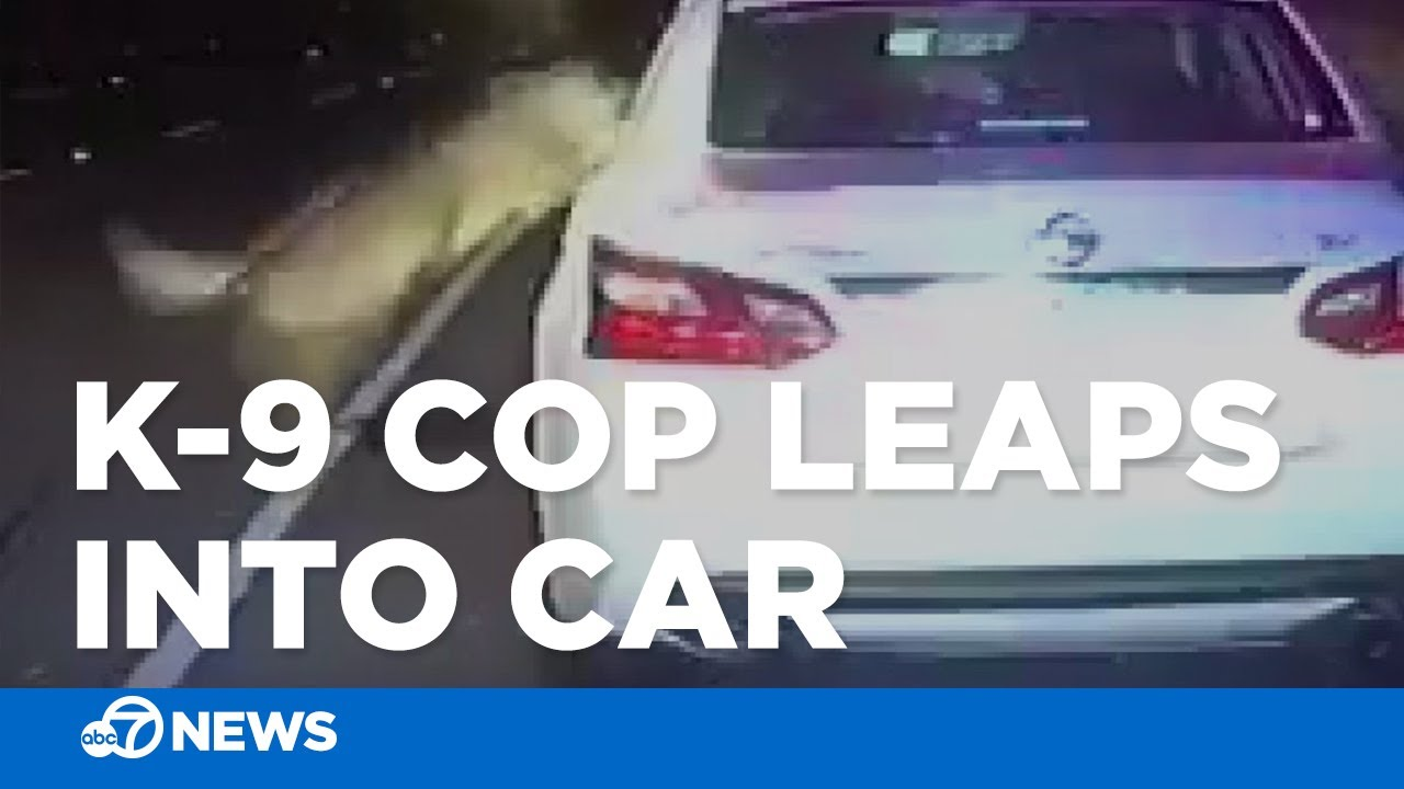 Police K-9 leaps inside suspect's car