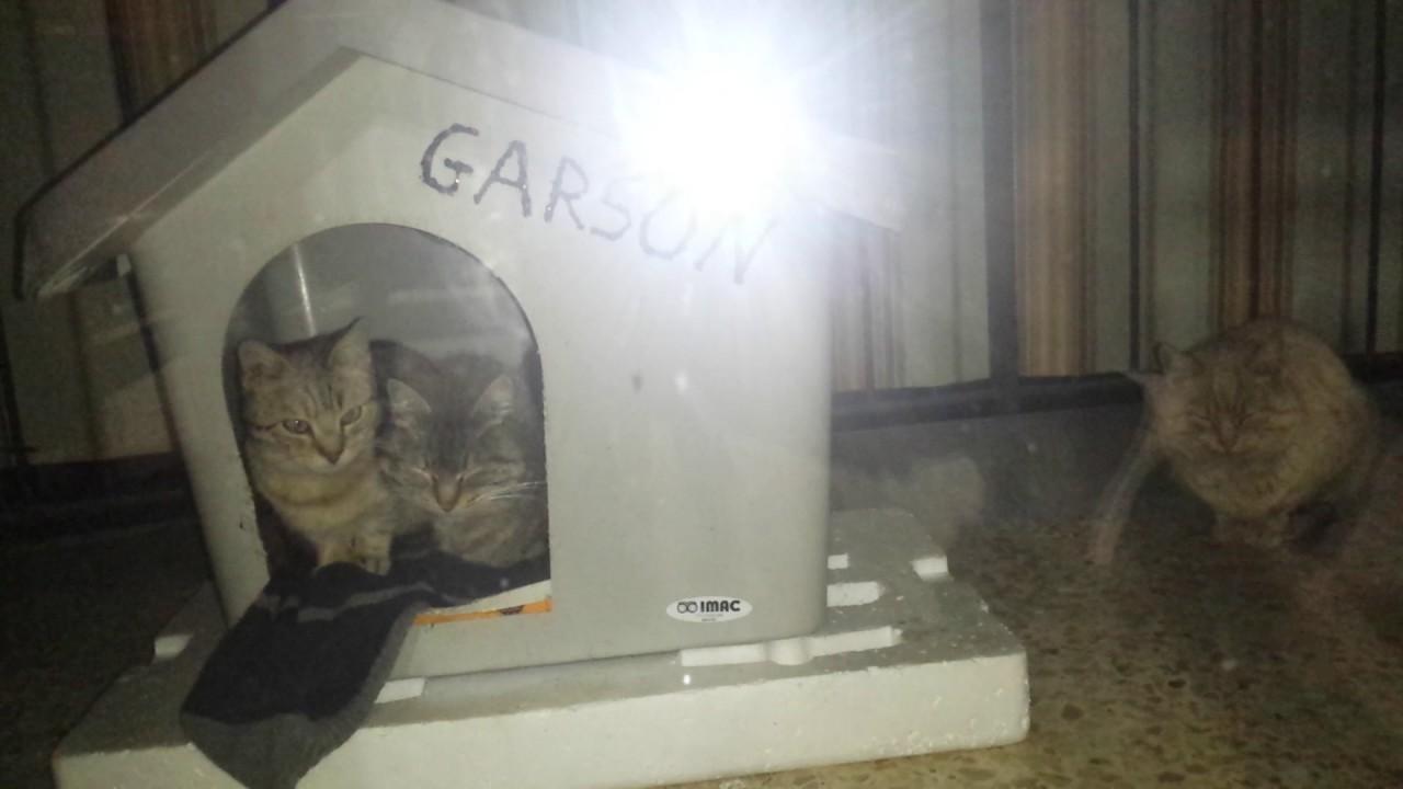 Costruire Cuccia Per Gatti gatti randagi trovano riparo in una cuccia per cani - youtube