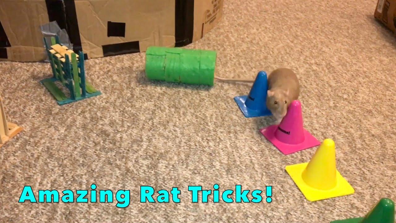 Bean the Rat Trick Compilation Part 4!