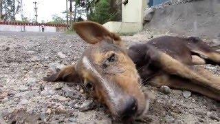Чудесное спасение щенка который умирал на улице