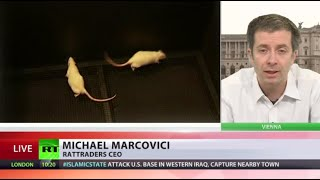 Rats of Wall Street: Artist trains rodents to trade on forex markets