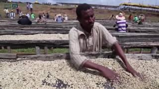 مصر العربية | صناعة القهوة .. دولار مقابل يوم عمل لماركات عالمية