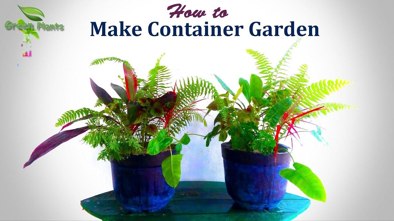 How To Make Container Garden Step By Grow Plants In