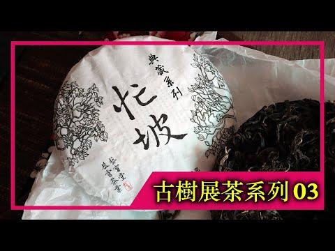 《古樹展茶系列》EP.03 2021年忙坡老寨古樹純料(4K UHD)【藝寶堂台灣張哥】