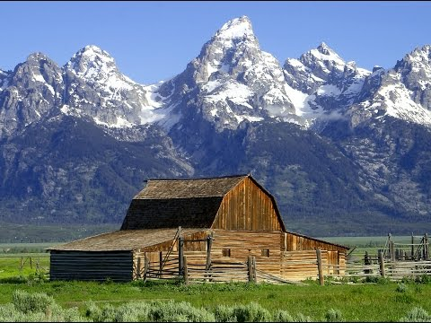 Bisons / Buffalo In Grand Tetons National Park - Mormons Row Wyoming