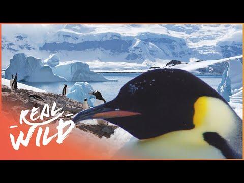 Incredible Journeys Across Antarctica | Expedition Antarctica | Real Wild