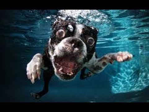 CAUTION: Your BELLY MAY HURT due to these FUNNY DOGS - LAUGH at these AWESOME DOGS with us!
