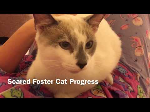 Scared Foster Cat Progress