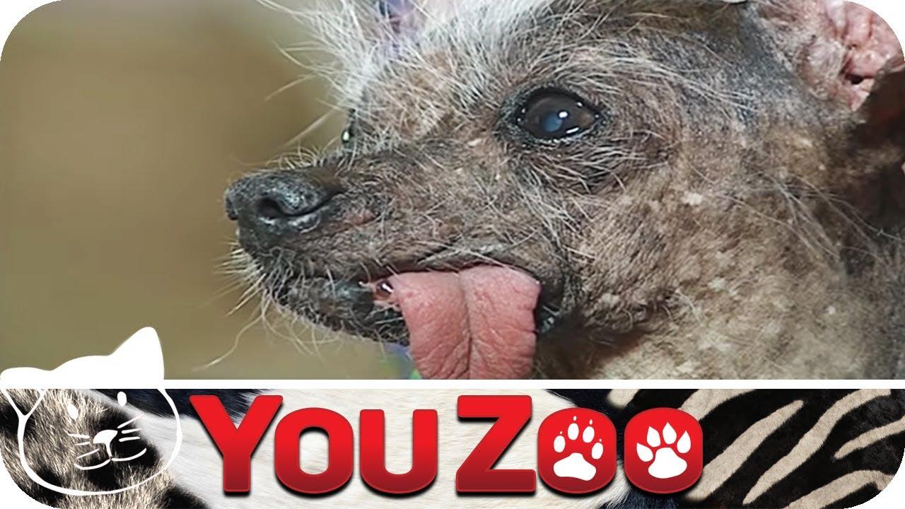 Der Hässlichste Hund Amerikas - YouTube