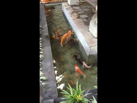 Kolam ikan di halaman rumah